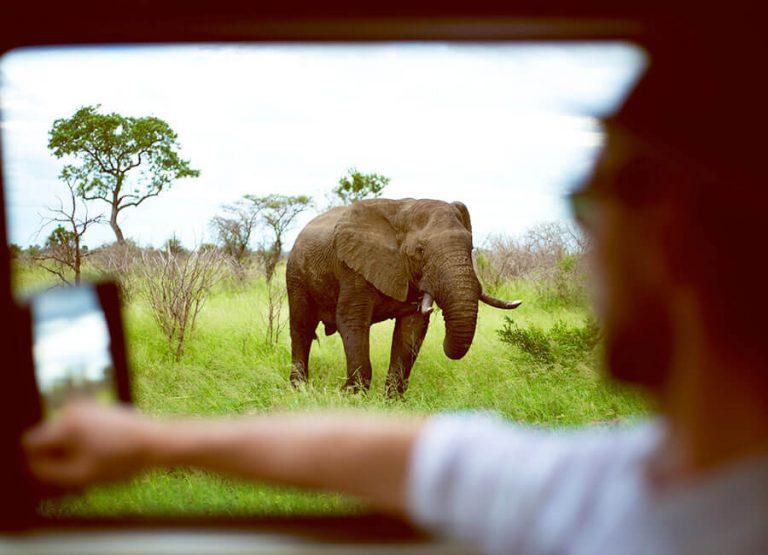 Safari med hyrbil i Sydafrika