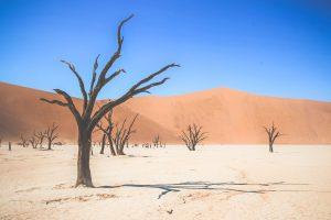 En resa till Namibia, med Safari i Afrika.